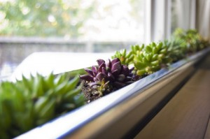 diy-windowbox-succulent-planter-500x332